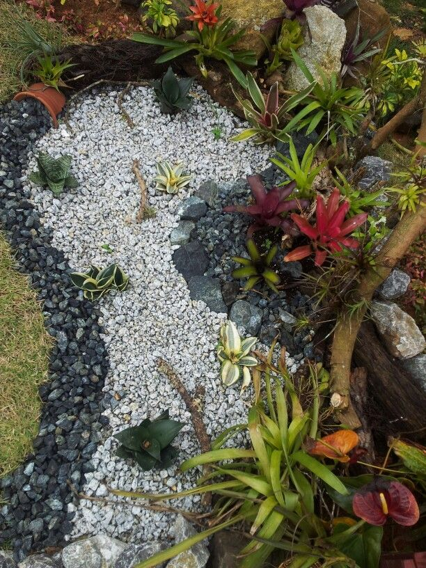 55 best images about bromeliad landscaping on pinterest for Jardines para espacios pequenos