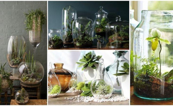 14 Cool Terrarium Ideas That Are Simply Amazing