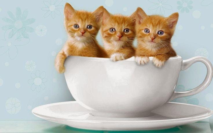 Lucu Kucing Hidup Wallpaper untuk (Android) Download Gratis di