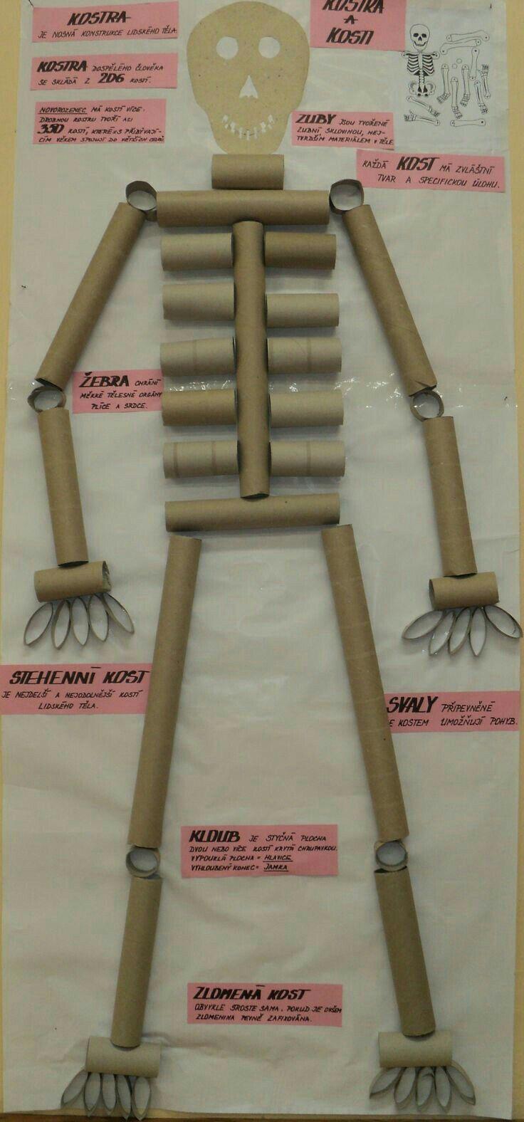 Ludske telo