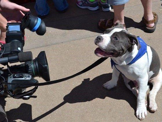 16 best runauggierun on facebook images on pinterest dog