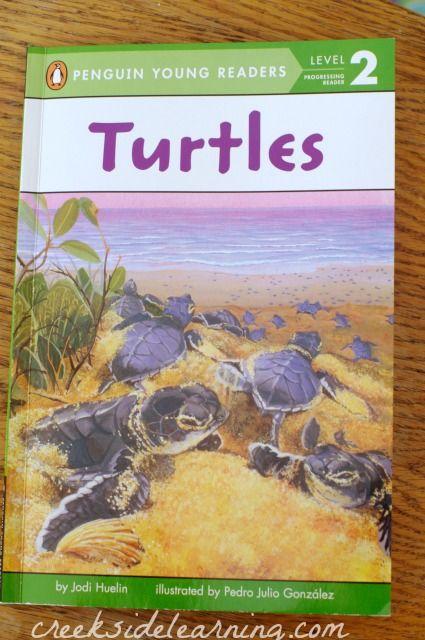 where do sea turtles live