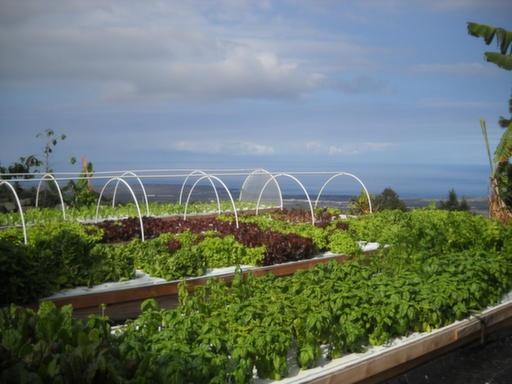 280 best images about aquaponics on pinterest gardens for Aquaponics hawaii