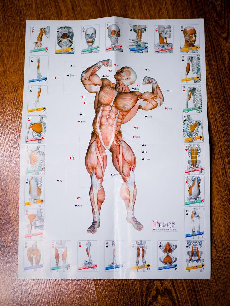 https://flic.kr/p/CCVp95 | 9 Muscle Playing Card - uniqe product from japan | playing card from japanese shop: roundflat.jp/  more anatomy products on: muscleskinsuit.com/