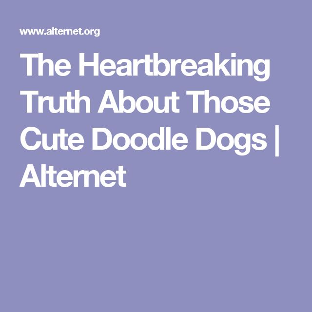 The Heartbreaking Truth About Those Cute Doodle Dogs | Alternet