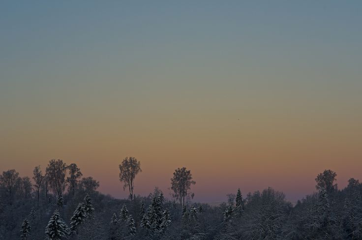 Feel the cold. by geir tønnessen - Frosty atmosphere on a cold winter day.