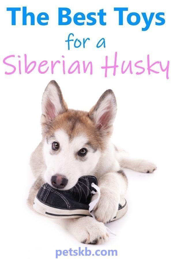 My Best 3 Toys For Siberian Huskies Husky Best Dog Toys Dogs