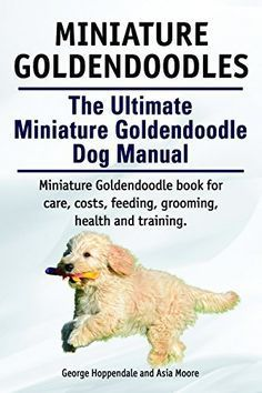 Mini Goldendoodles on Pinterest | Mini Goldendoodle, Goldendoodle ...                                                                                                                                                     More
