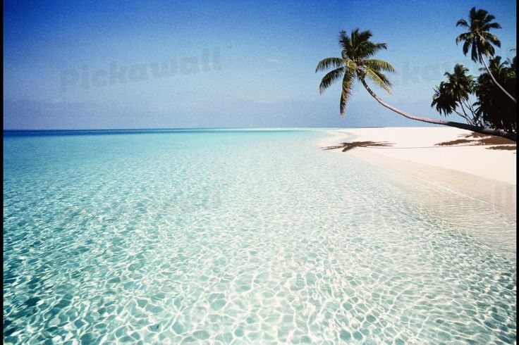 palm trees maldives by