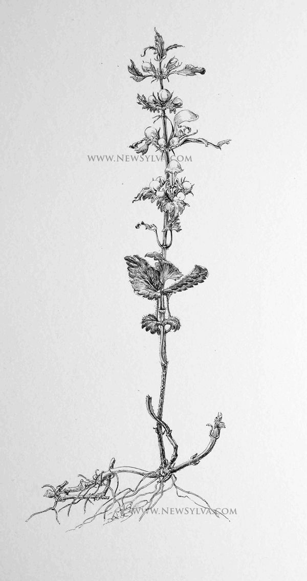 48 best sarah simblet images on Pinterest   Botanical art, Botanical ...