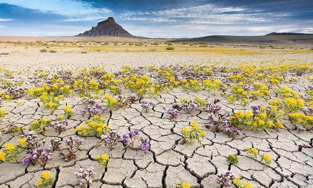 Flores (Foto: Lindsay Daniels / reprodução)