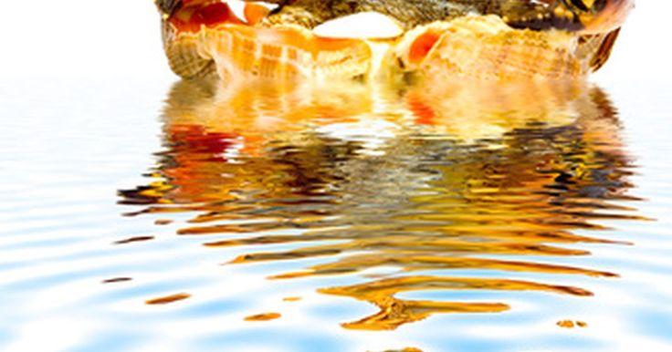 Quanto ganha um capitão de navio pesqueiro de caranguejos?. De acordo com o Departamento do Trabalho do Alasca, trabalhar como um pescador de caranguejos em um navio comercial é o trabalho mais perigoso do país. Nos últimos 50 anos, de acordo com o Departamento de Pesca e Planejamento do Alasca, bilhões de quilos de caranguejo-rei foram pescados nas águas do país. Depois do salmão vermelho, os ...