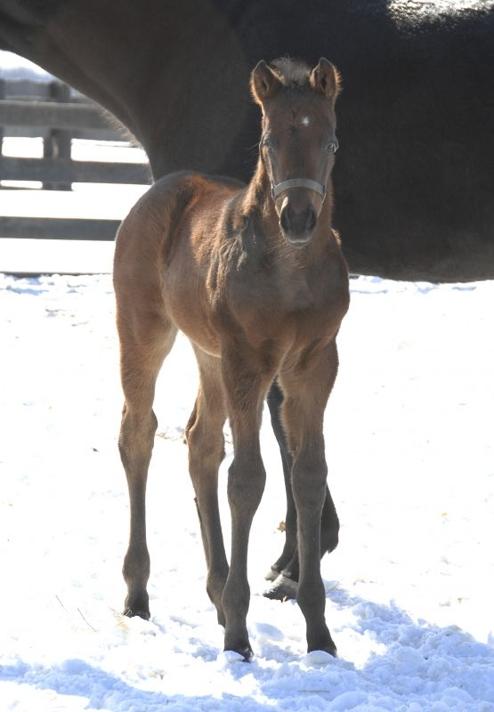 2015 Filly Mission Impazible / Silence Dogood - First Year Sires - Foal Photos