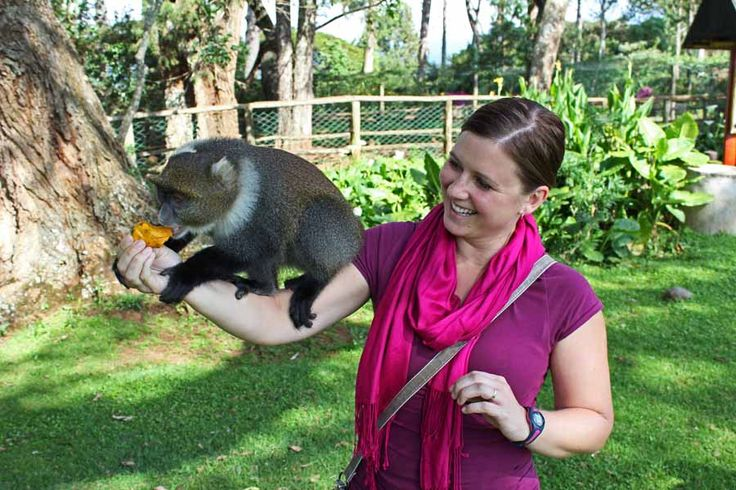 It's not very often you get to feed a monkey from your hand, pet a turtle, and feed a bongo, but we got to do all that at Mt. Kenya! Such a cool experience. #travel #wildlife #animals