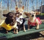 North Carolina animal organization hosts 'Senior Prom' for elderly dogs