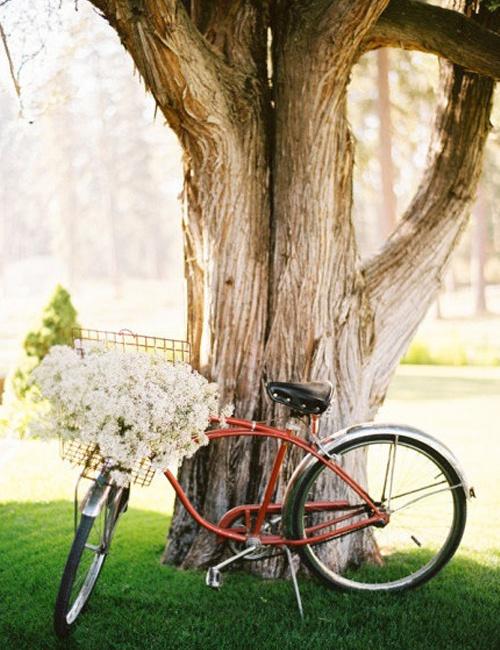 M s de 1000 im genes sobre las bicicletas son para el for Guardar bicicletas en el jardin