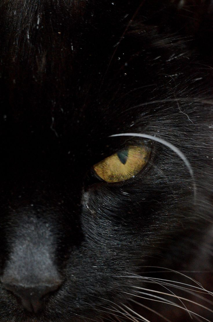 """Cats' eyes seem a bridge to a world beyond the one we know."" --Lynn Hollyn"