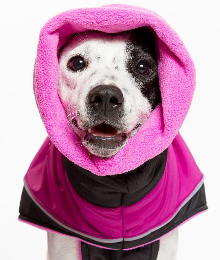 Kutyakabát - Kutyaruha