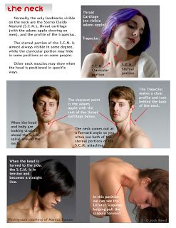 17 best anatomy neck and clavicle images on pinterest anatomy drawsh anatomy neck and head ccuart Gallery