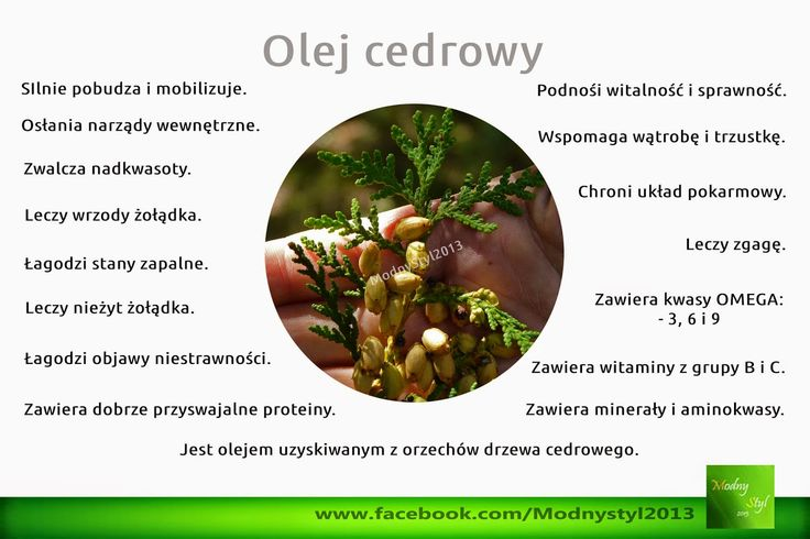 Jest olejem pozyskiwanym z orzechów drzewa cedrowego. Dodaje witalności i energii, silnie pobudza, oprócz tego zwalcza problemy żołądkowe.