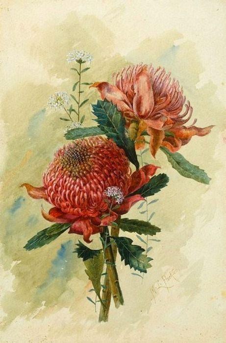 Margaret Lilian Flockton - Waratahs -  1895
