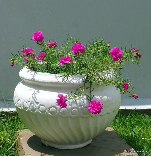 17 melhores ideias sobre plantas dom sticas no pinterest for O jardins d eglantine