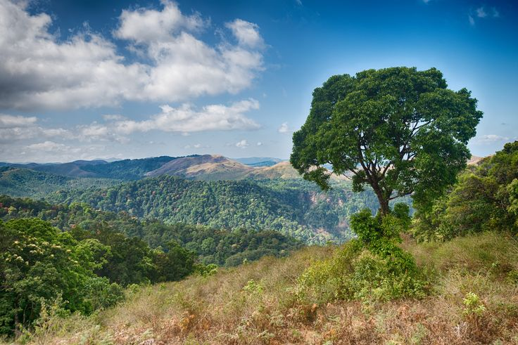 https://flic.kr/p/kGrXKa | Periyar Tiger Reserve, Thekkady, Kerala, India