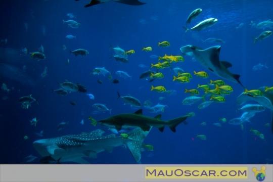 Georgia Aquarium: Um tour pelos bastidores do maior aquário do mundo