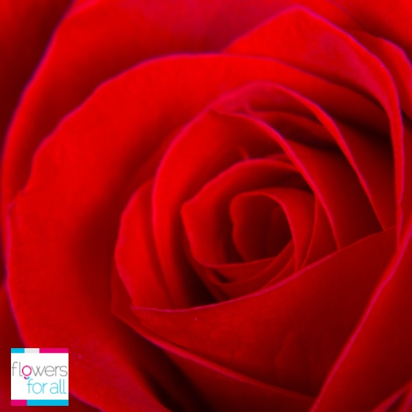 Flowersforall.com Red Roses not only represents love, it also enlights beauty and respect.