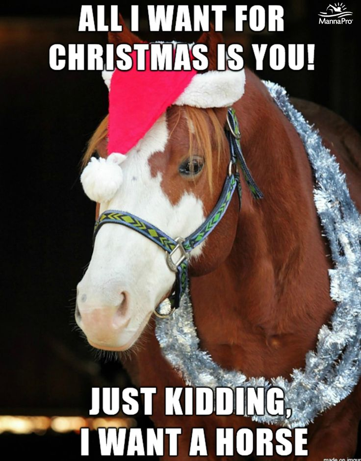 Horses first, the rest later! #horse #christmas