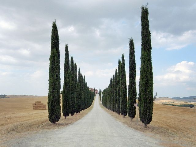 Tuscany: The Roads, Houses, Emeralds Cities, Driveways, Places, Landscape, Italy, Photo, Tuscan Roads