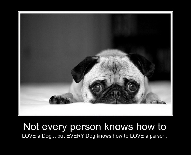 ~bless their hearts~dogs~