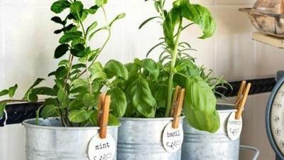 Nejčastější chyby v pěstování bylinek. Proč vám doma zahynou?