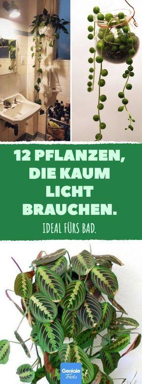 12 Pflanzen, die kaum Licht brauchen. #pflanzen #b…