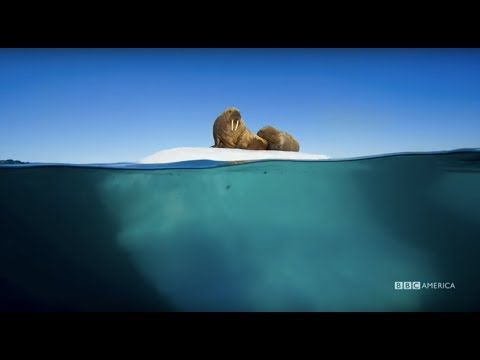 BBC released a stunning 5-minute trailer for 'Blue Planet 2', soundtracked by Radiohead and Hans Zimmer and featuring some stunning wildlife shots! | Shock Mansion