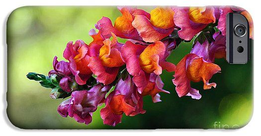 A pretty and colorful phone case with a gorgeous vibrant Snapdragon >> https://kaye-menner.pixels.com/products/colorful-snapdragon-kaye-menner-iphone-case-cover.html?phoneCaseType=iphone6s