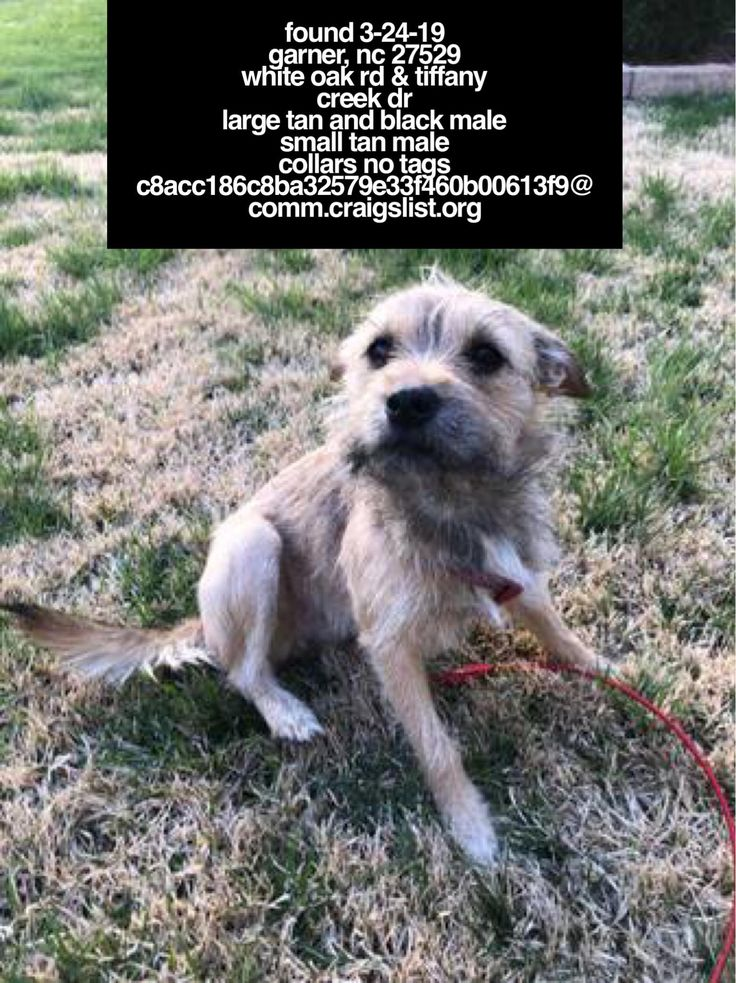 FOUNDdog 32419 Garner, NC 27529 White Oak Rd