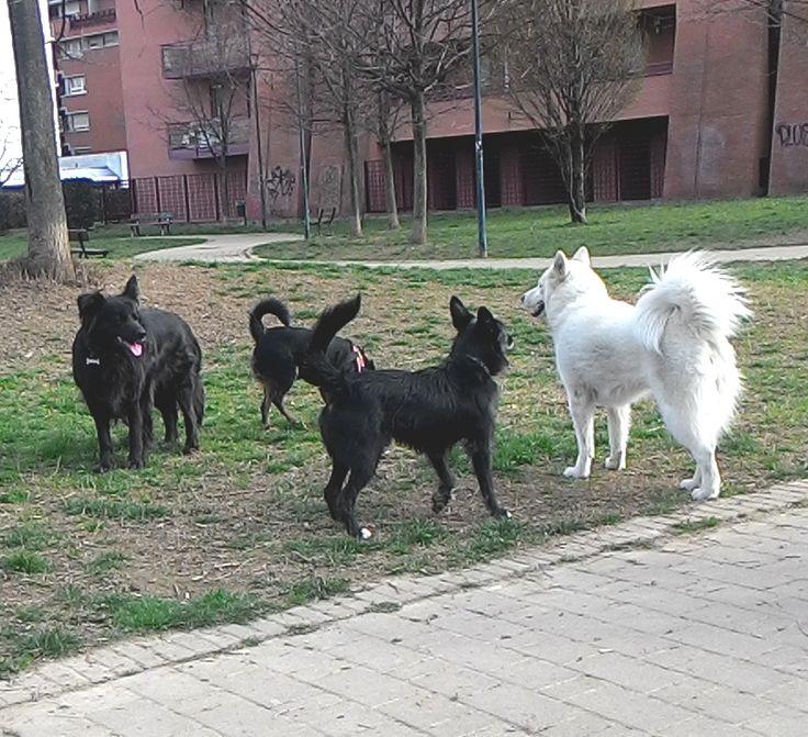 14/03/2016 - Torino con Lilla, Zorba e Temi