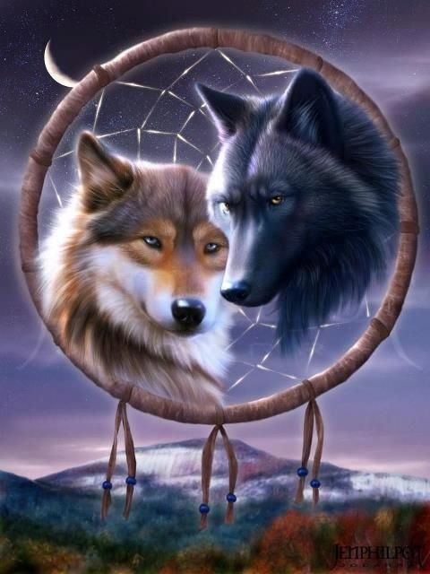 Two wolves in dreamcatcher
