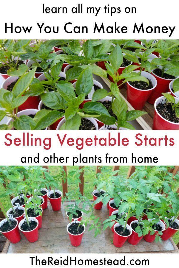 Wie man Geld verdient Pflanzen zu Hause wachsen zu lassen (eine leichte Nebenbes…