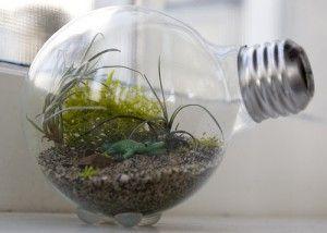 Light Bulb Terraium