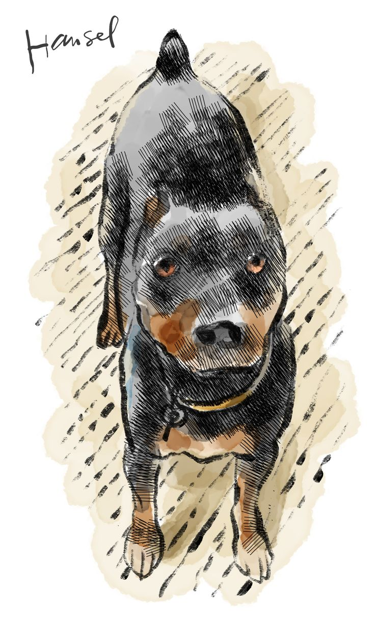 """""""See here. The pup is measure of the man."""" - From Hounds of Wonder: A Life In Rescue Dogs by B.D. Love. Illustration by Walt Taylor."""