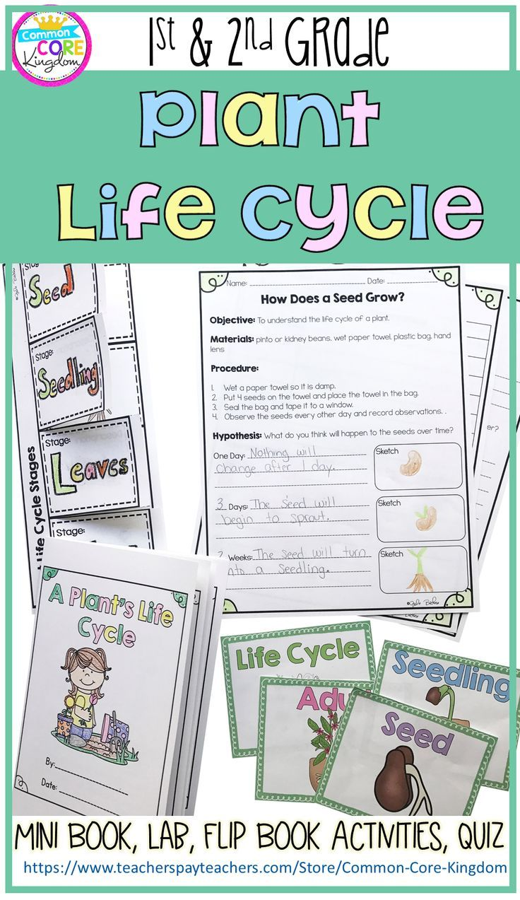 Plant Life Cycle- 1st & 2nd Grade | Life cycles, Science