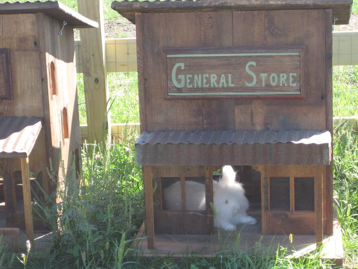 living in bunnyville...at Pinter's in Decorah, IA