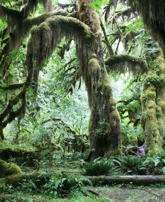 Honeymoon in the Hoh Rainforest, Olympic National Park? Heck yes i did!