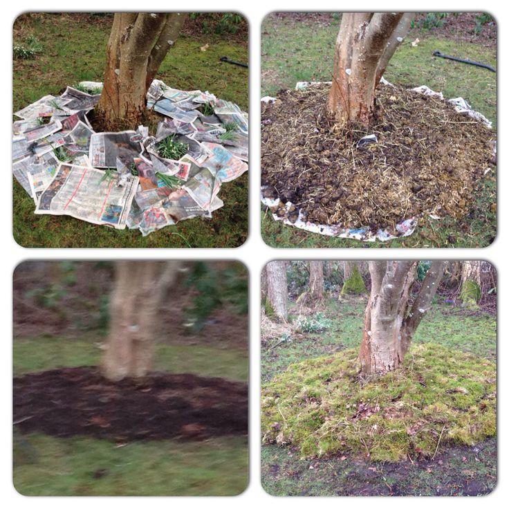 Lasagne bed omkring et træ og afsluttet med mos. Er spændt på at se, hvordan det kommer til at se ud på sigt.