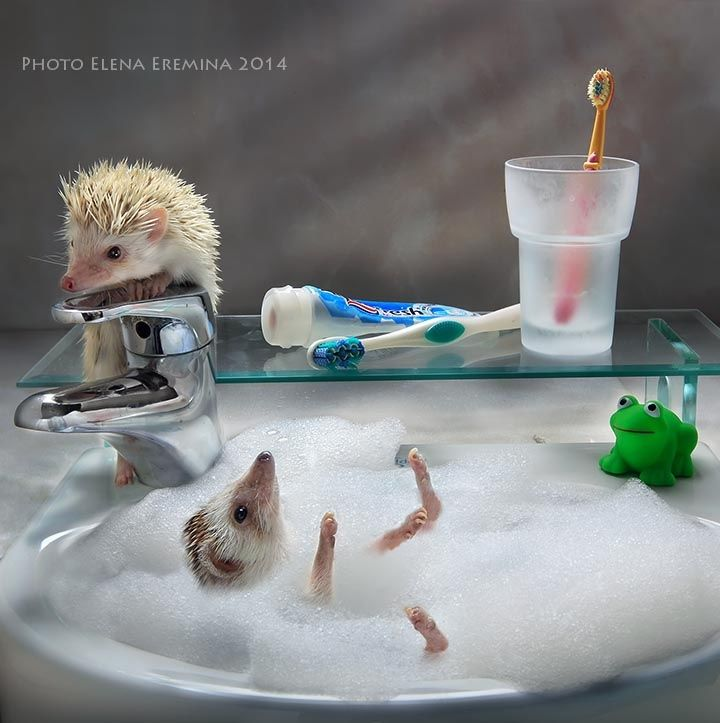 alone at home - This picture is taken for a wall calendar with hedgehogs for…