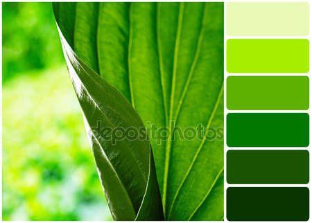 1000 ideas sobre paleta de color verde en pinterest - Colores verdes azulados ...