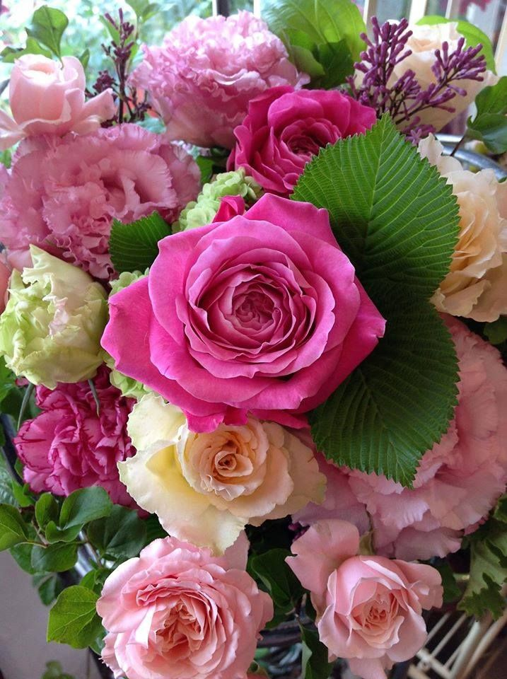 103 best roses images on Pinterest | Beautiful flowers, Pretty ...