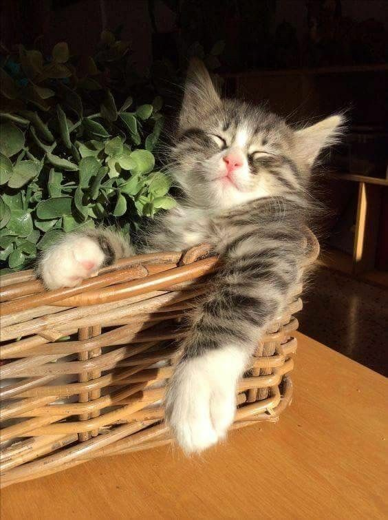 Cat Is One Of The Most Popular Family Pets Page 21 Of 59 In 2020 With Images Cute Cats And Kittens Cats And Kittens Pets Cats